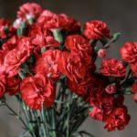 母の日の由来とは?カーネーションの花言葉をご紹介します!