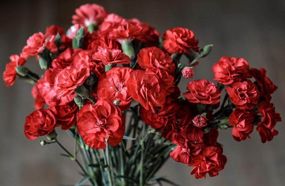 母の日、由来、カーネーション、花言葉