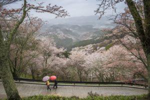 豊臣秀吉、吉野山、日本一、桜