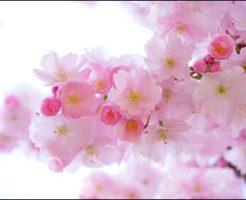 春名風花、現在、子役時代