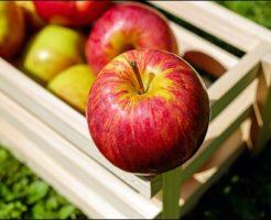 りんごちゃん、昔の写真、本名